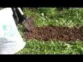видео посадка клубники с удобрением